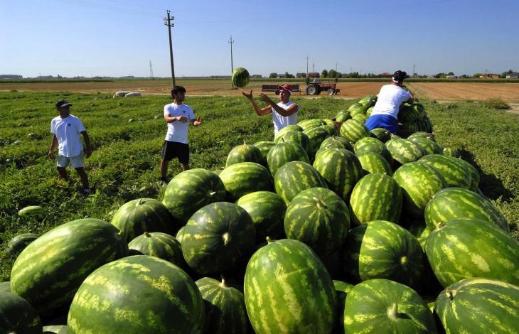 Ecco cosa combinano gli stranieri dalle nostre parti for Piccole piantagioni