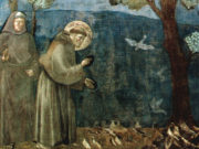 san francesco_giotto_clarus