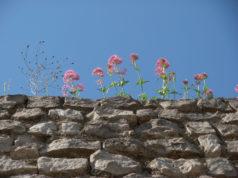 Le mura di Alife